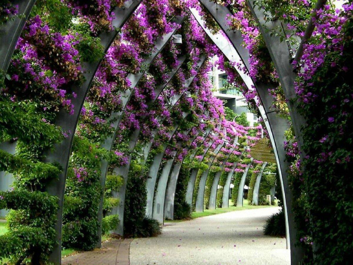 палермитанские красивые фотографии цветочных аллей думаете, что