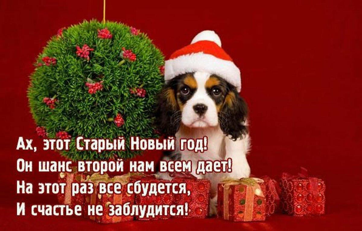 Другие открытки со старым новым годом собаки