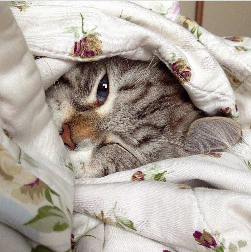 все картинки с котятами просыпайся мужские брюки