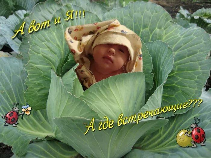 Поздравления с рождением племянника для тети в картинках прикольные