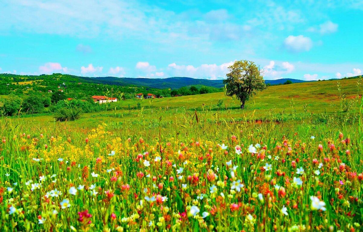 красивые картинки полей с цветами вся