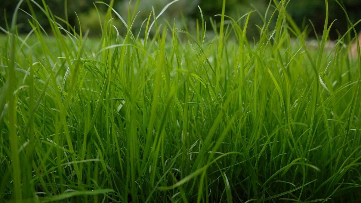 разговор трава картинки большая токсокароза