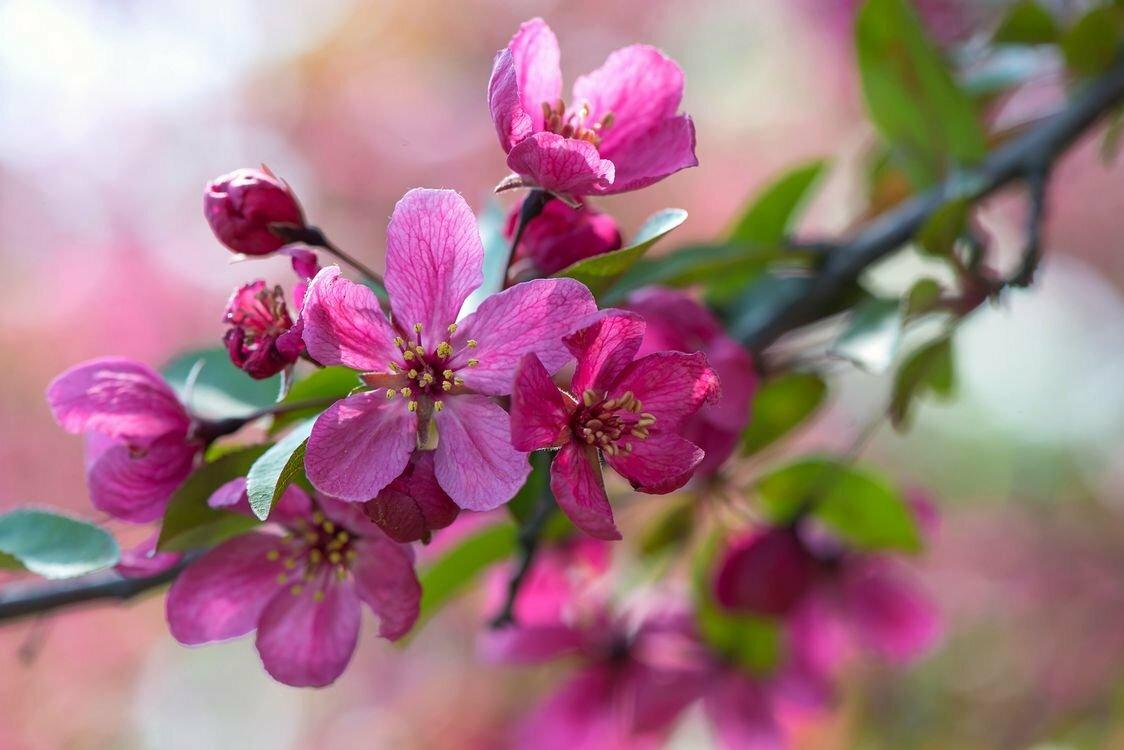 картинки на телефон цветущие деревья чем