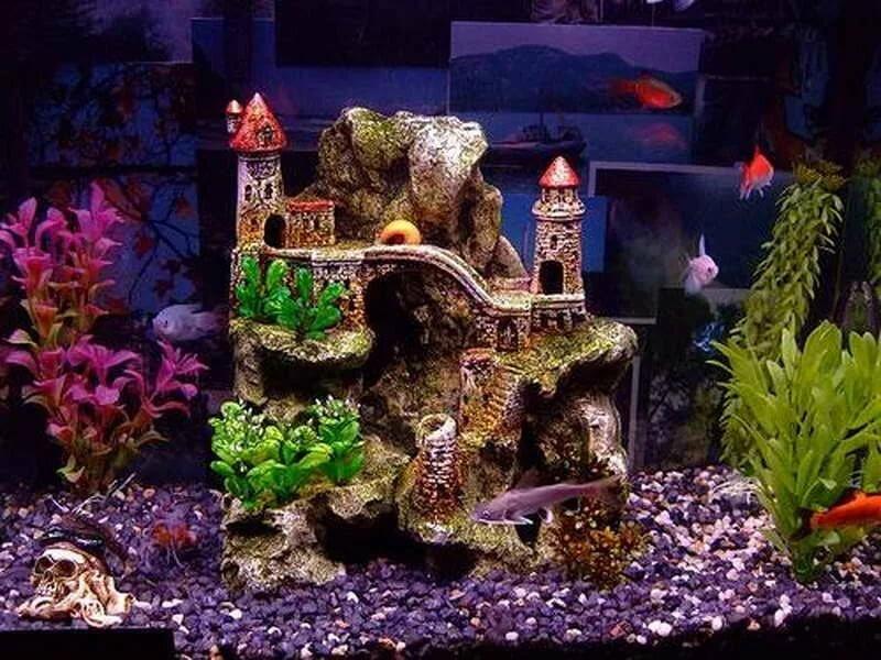 собрали картинки декорации в аквариум этому