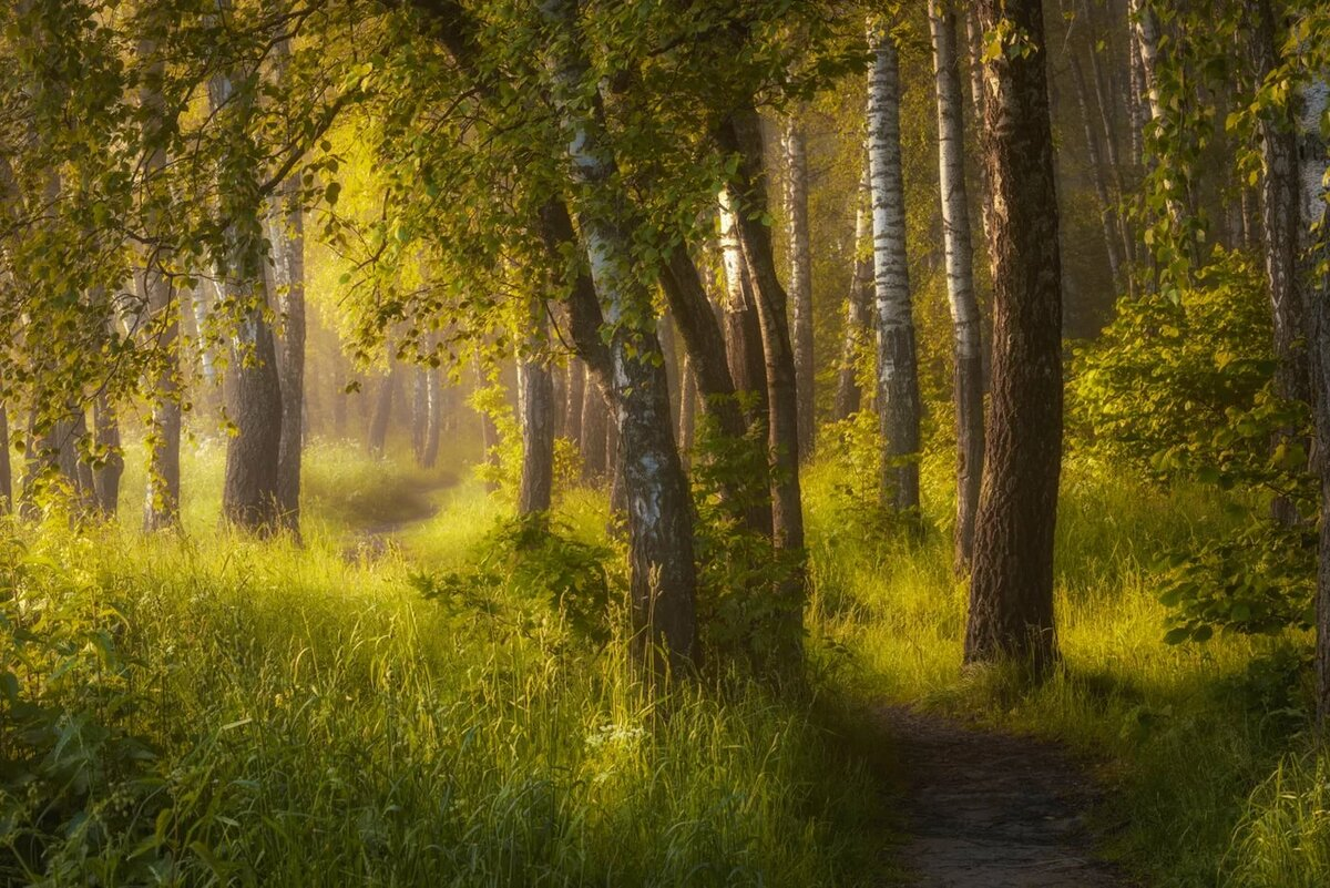 лес летним утром картинки для летних уличных