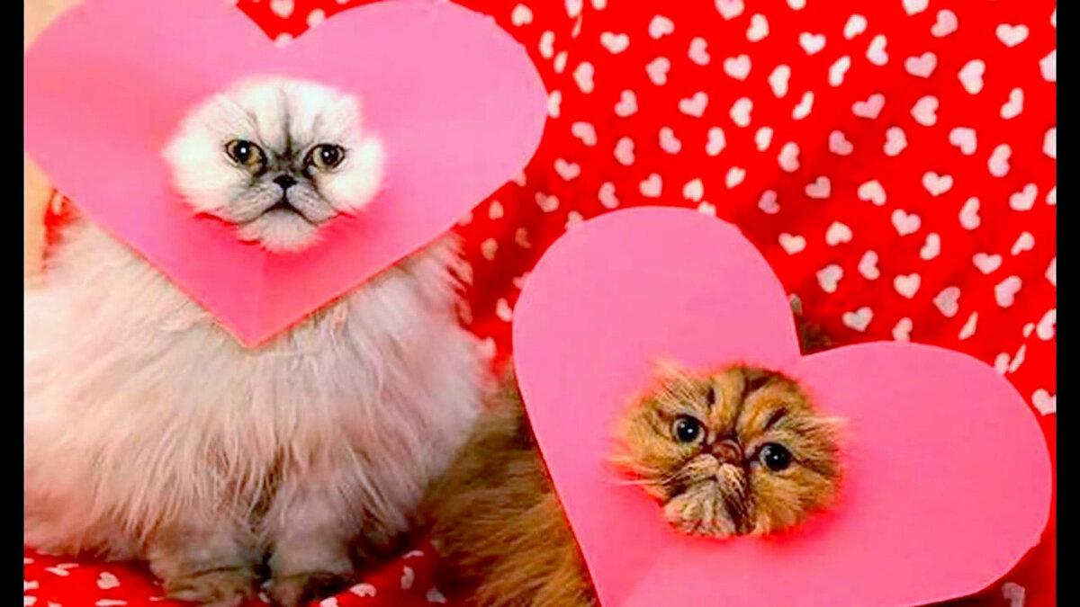 Смешные открытки с днем святого валентина фото