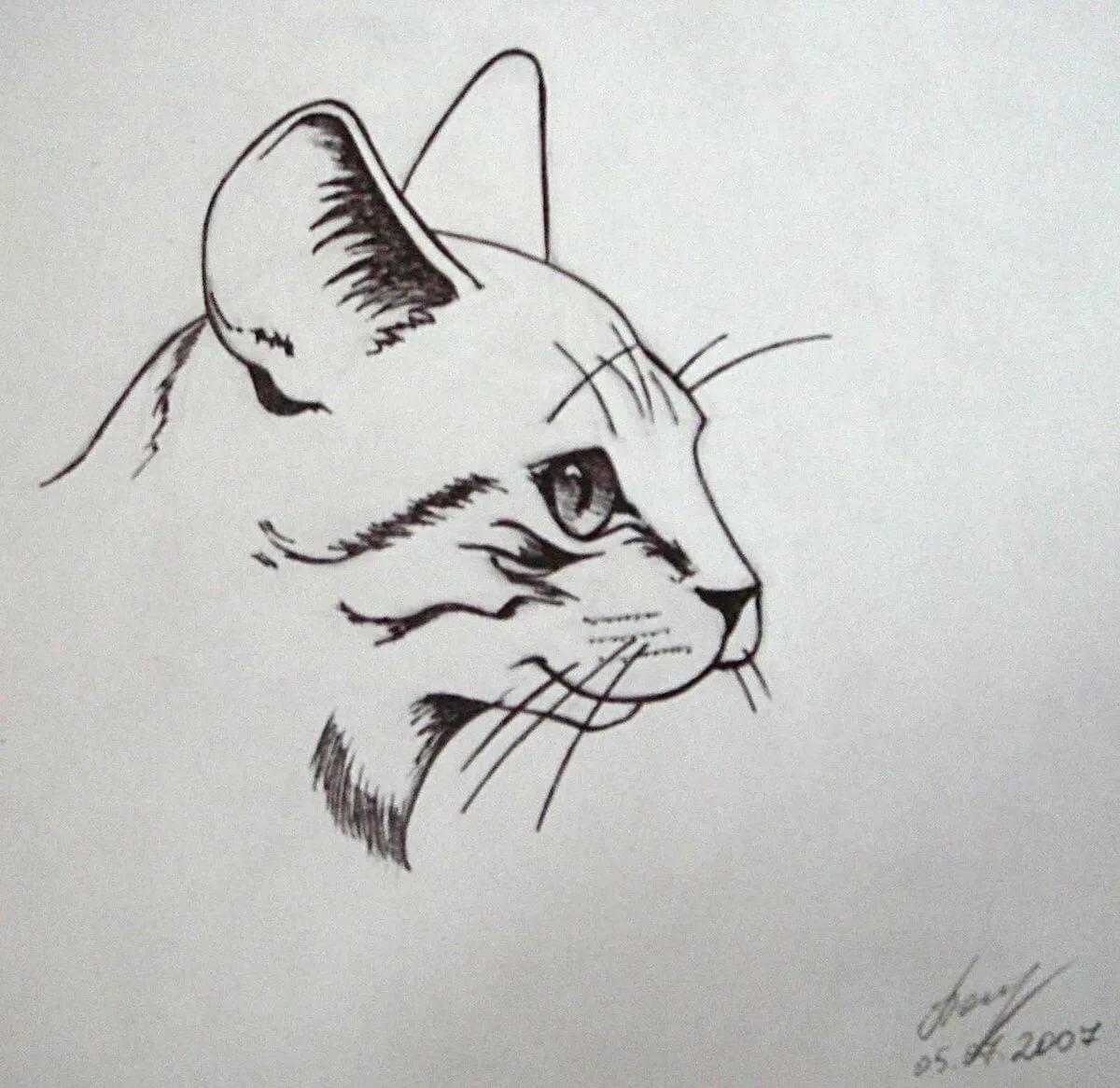 Картинки для срисовки смешные котики гелевой ручкой, картинки животными приколы