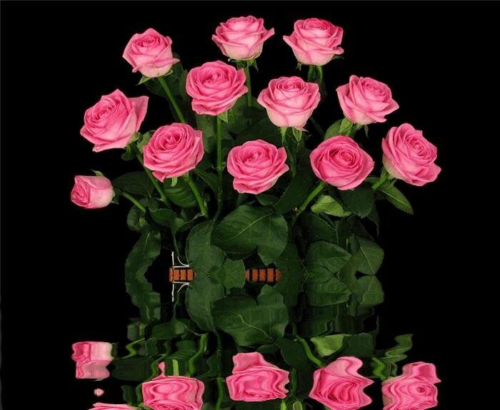 Картинки, красивые цветы большие картинки анимация