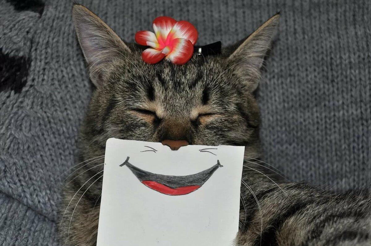 Крещение, открытка со смешным котом