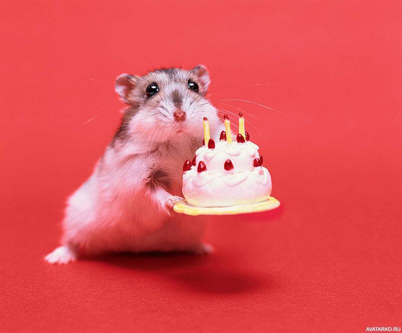 скетчерс считаются фото с днем рождения с мышкой кошек