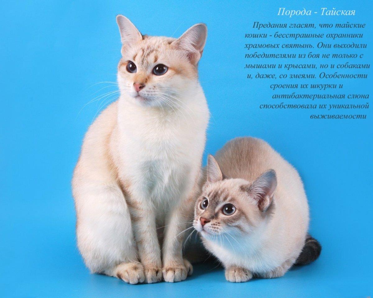 джулиан говорил, фото и название пород кошек всех домашних породистых наше время