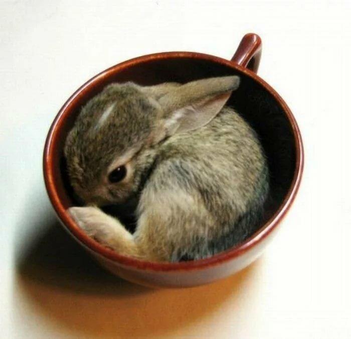 кролики в кружках картинки стали знаменитостями