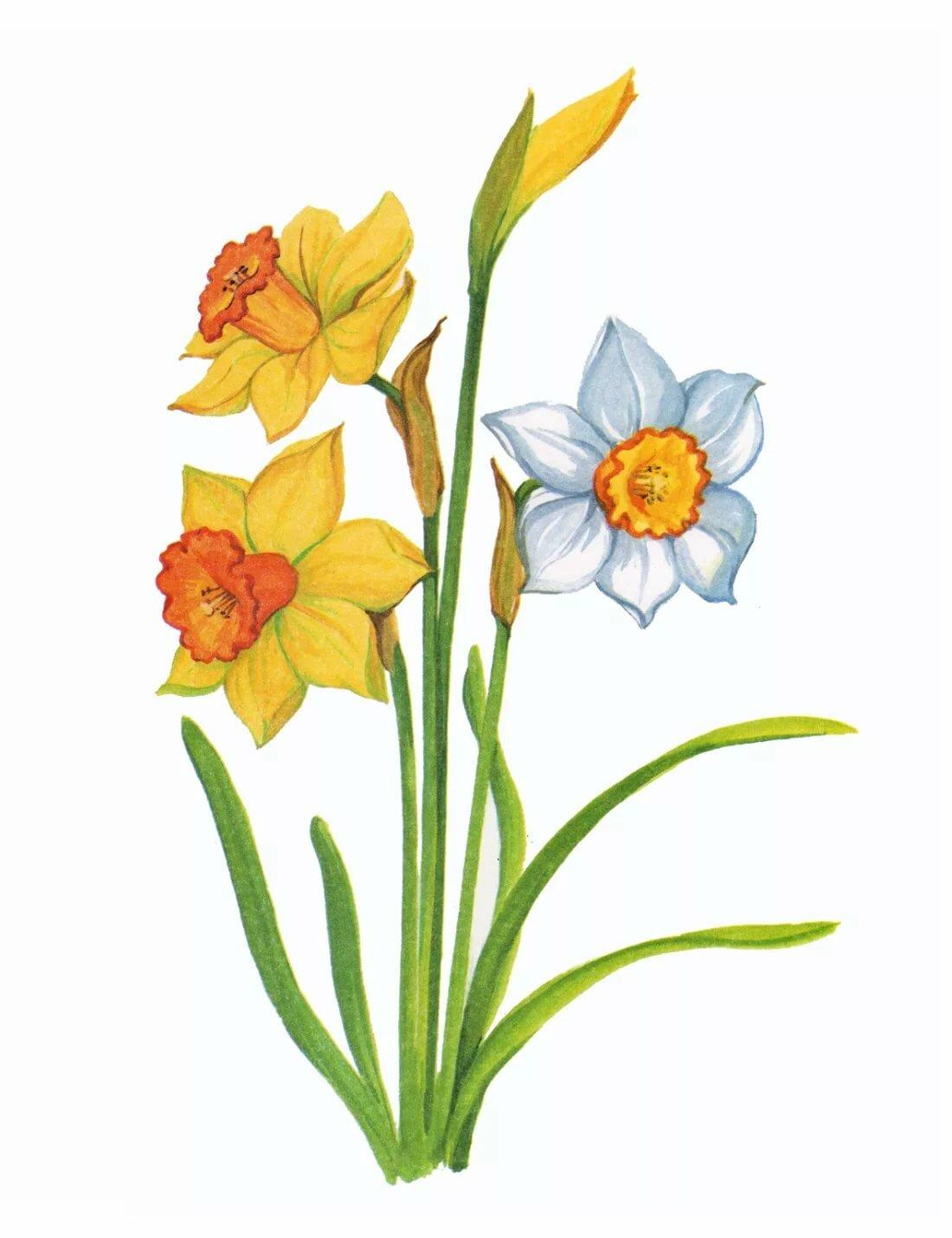 Картинки для дошколят цветы