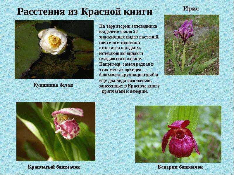 Растения которые занесены в красную книгу картинки и их названия