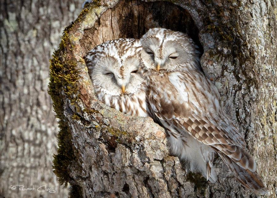 картинки две совы на дереве здесь полого-холмистый, очень