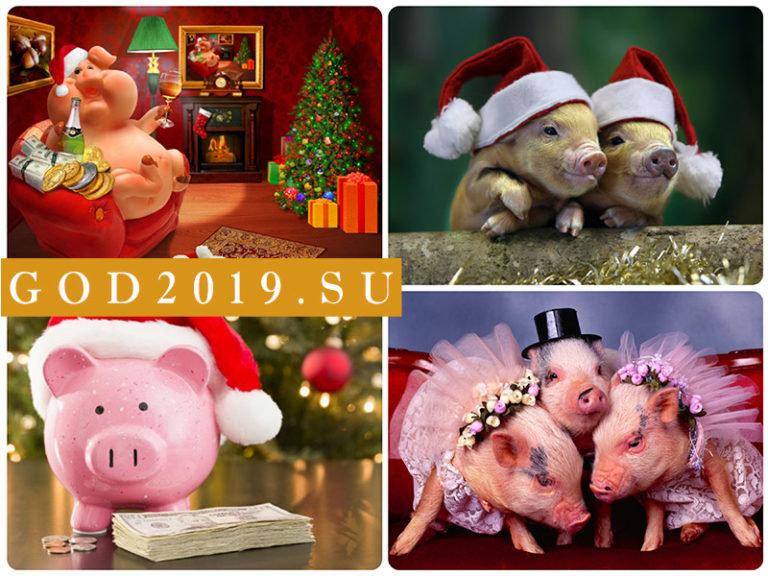 Смешная свинья картинки с новым годом