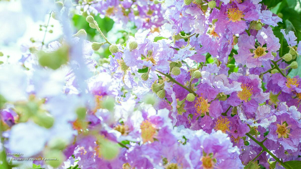 вашему обои на рабочий стол весна лето цветы дикорастущие