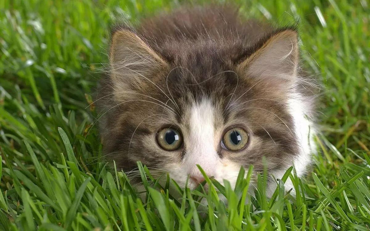 Картинки прикольный котята, февраля