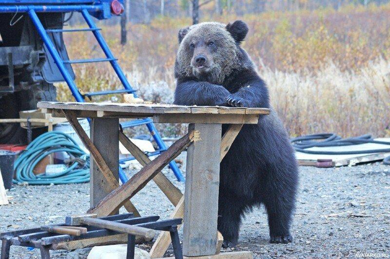 Картинки прикол с медведем