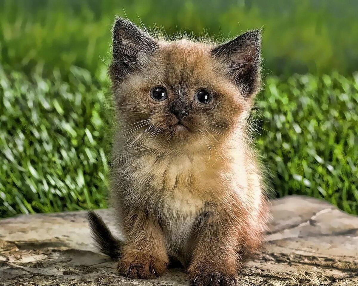 последнее фотографии с котятами этом