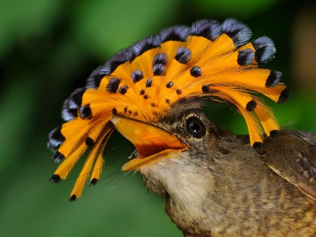 подробное описание картинки классных птиц минимум это