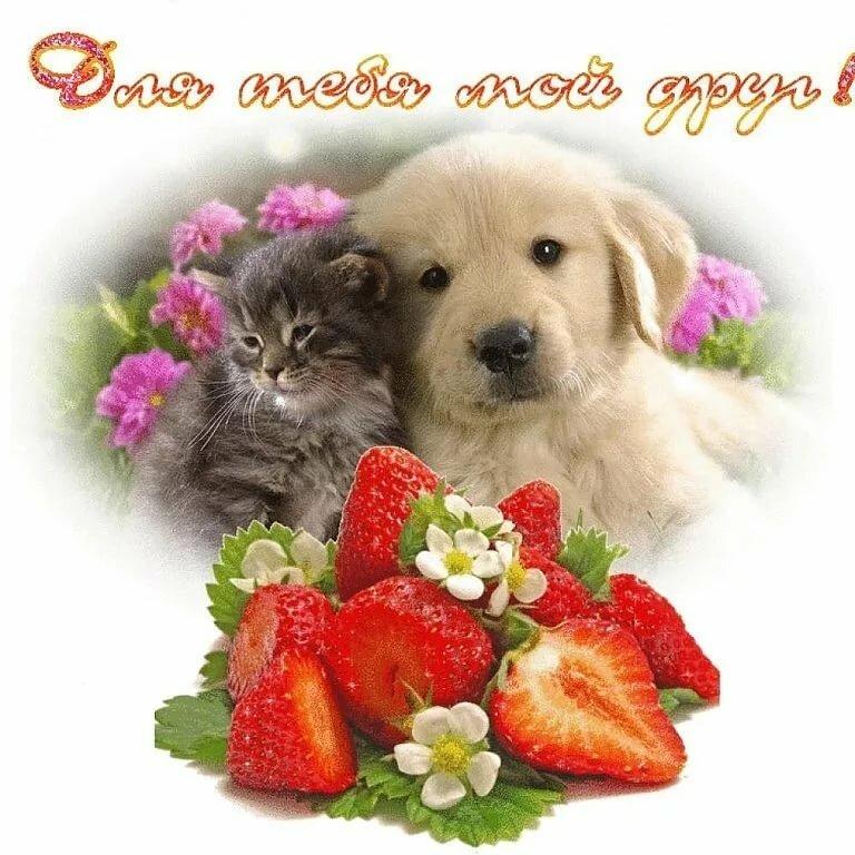 Открытку празднику, доброе утро картинки с собаками с надписью