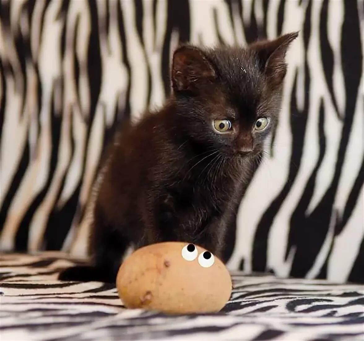 Картинки кошек и котят с надписями, картинки прощание