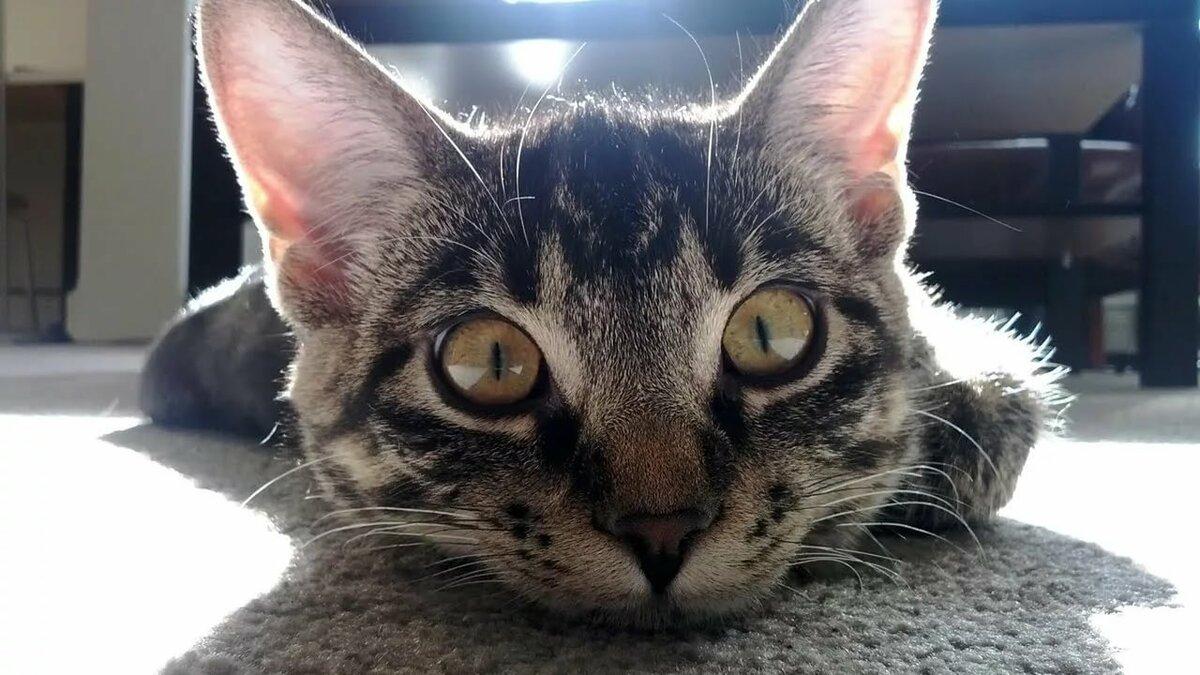 Настрою открытка, смешные картинки про животных кошки
