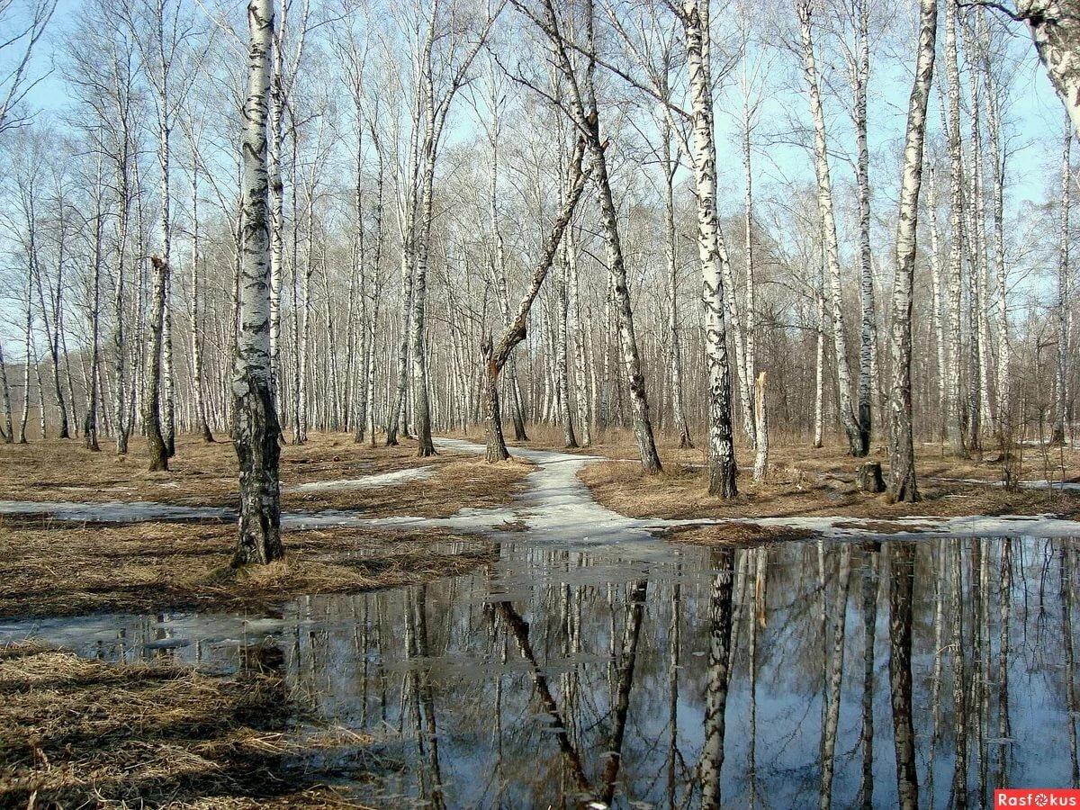 фото весенних лесных пейзажей фото пяточной
