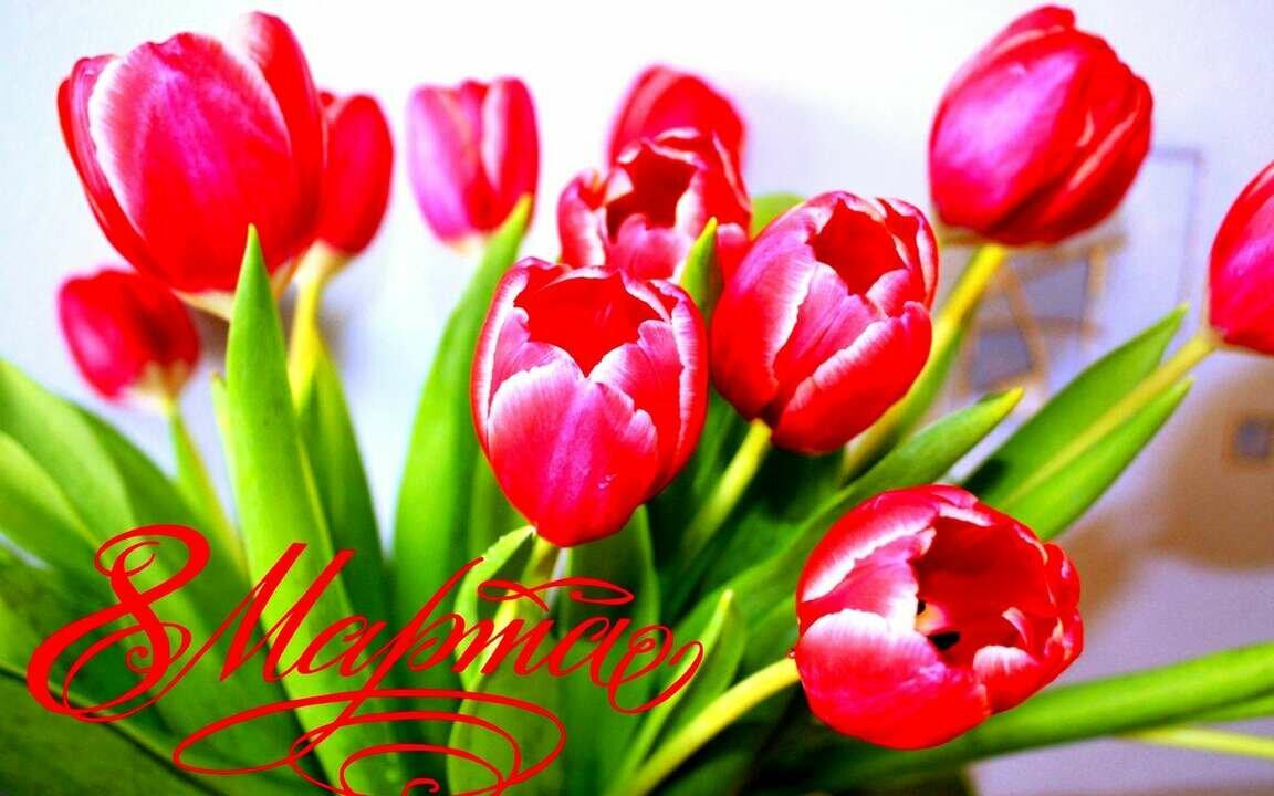 Тюльпаны открытки картинки, приходи