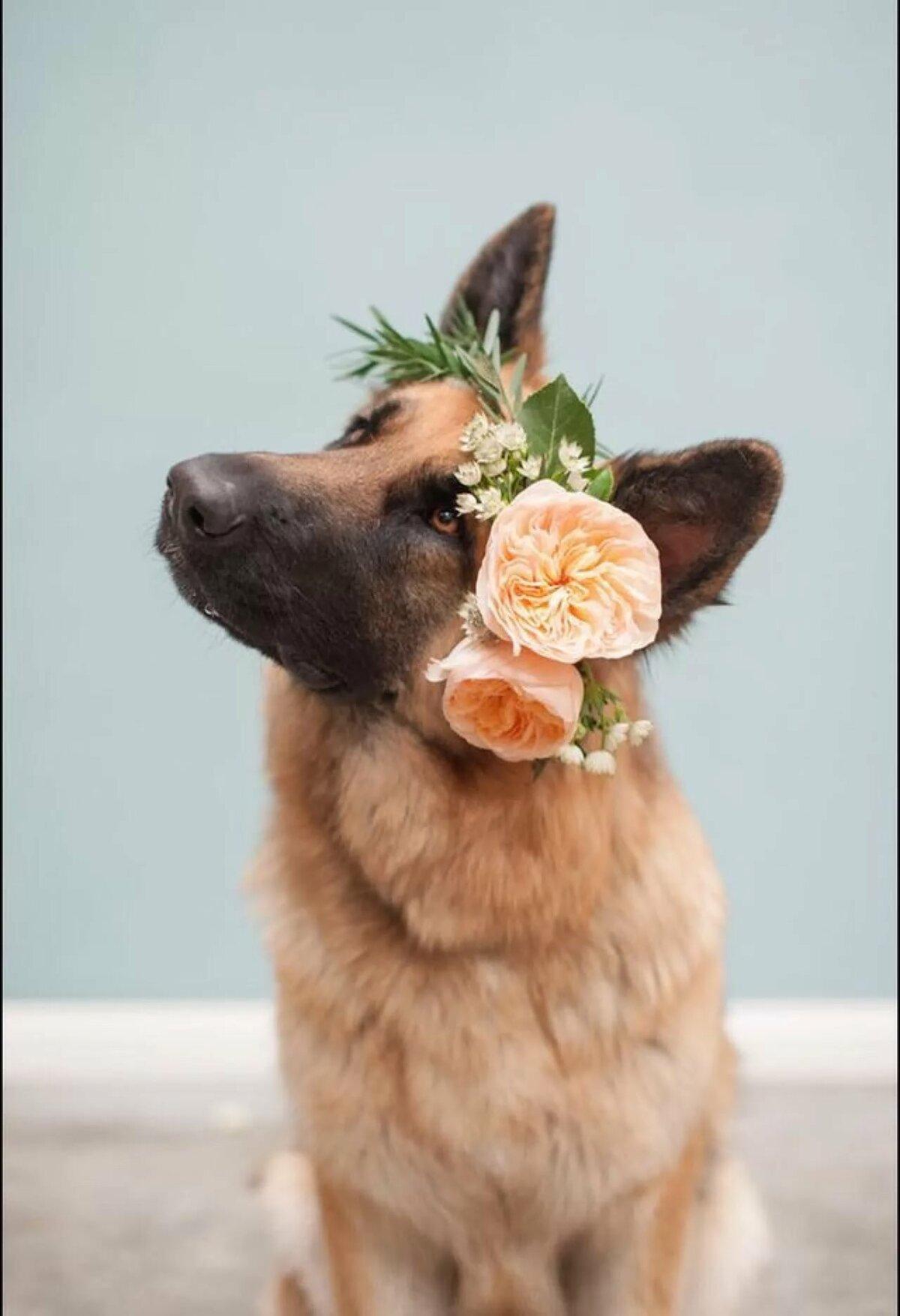 Картинки животных с цветами в зубах фото