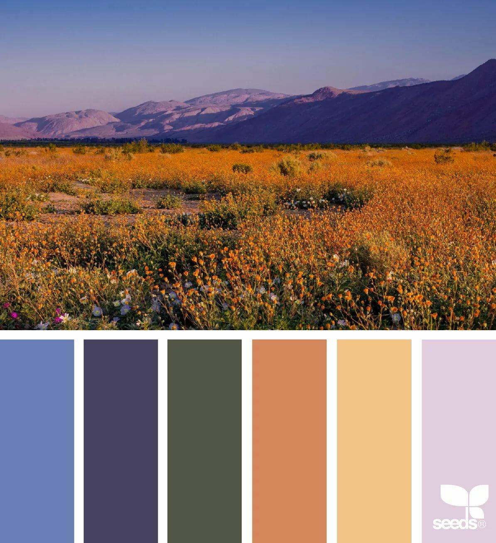 Цветовые картинки у окулиста эту