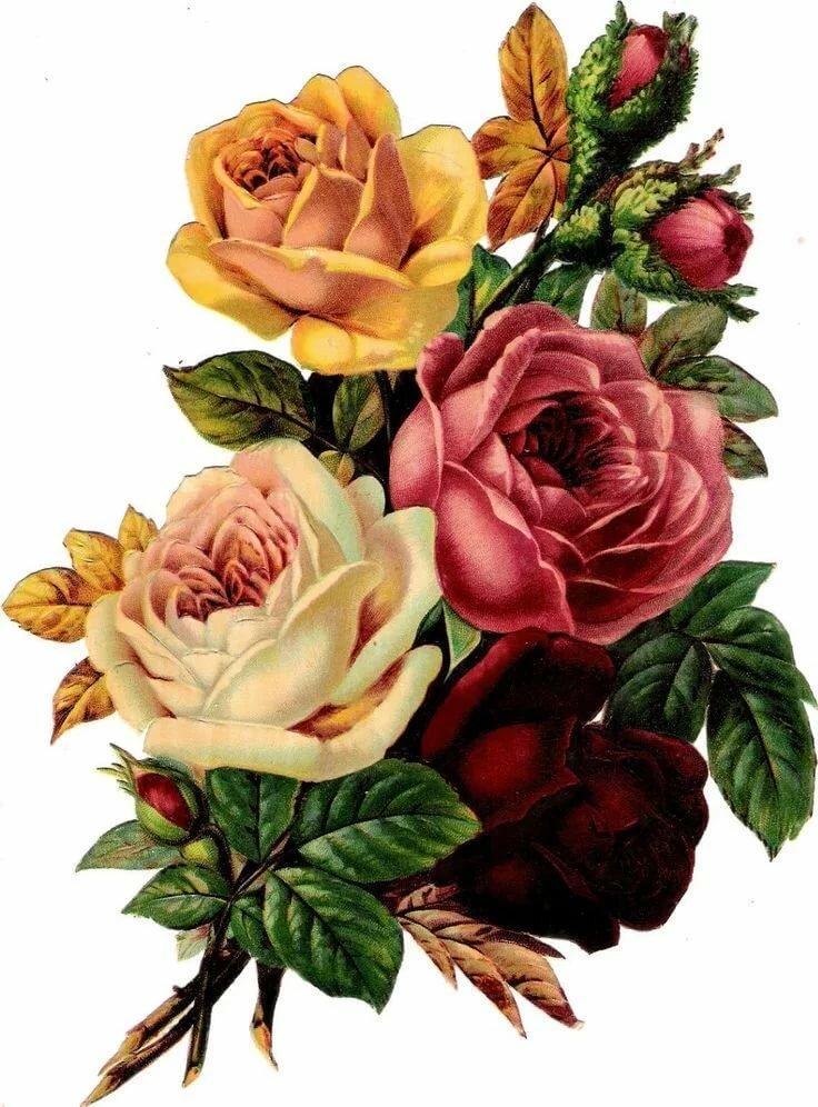Розы открытка рисунок, день