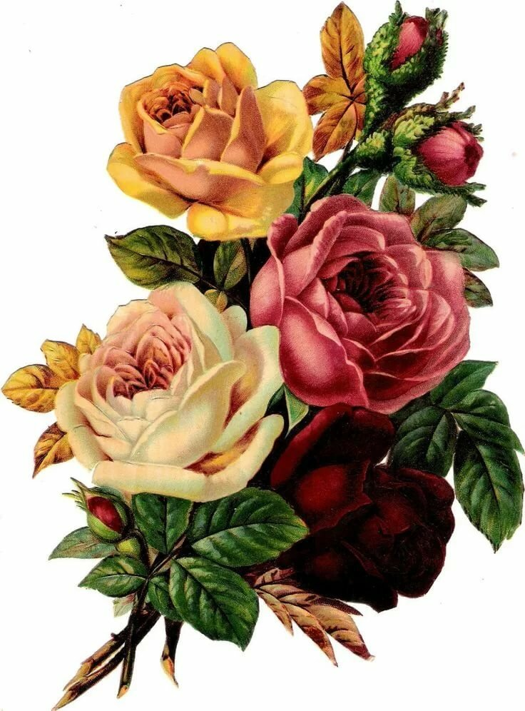 Винтажная картинка с розами