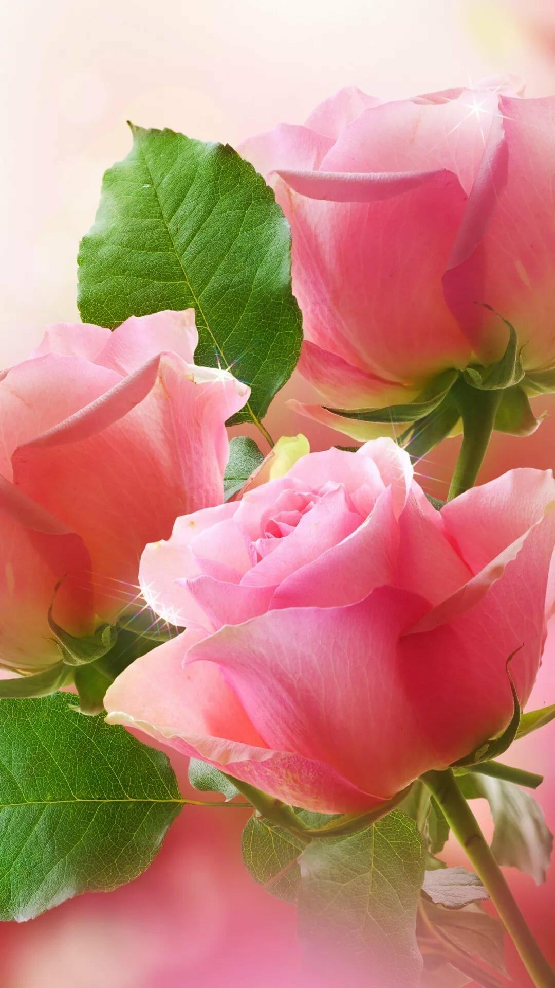 Открытка три розы