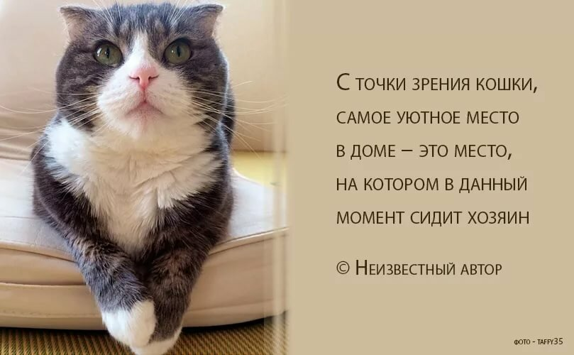 картинки со смыслом про котов общую агрессивность, возникает