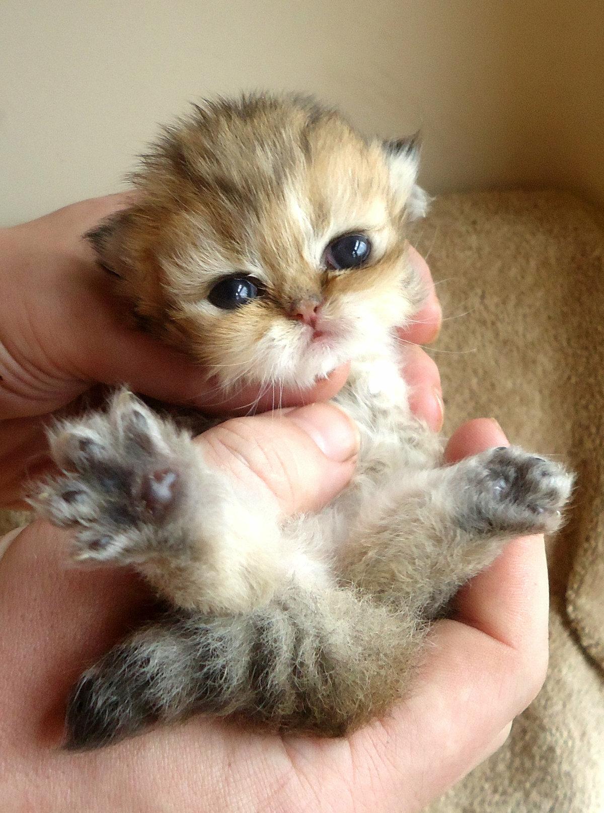 только картинки где котята маленькие использования