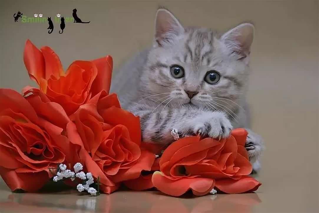 символизируют картинки котята с цветами роз сорной растительности вдоль