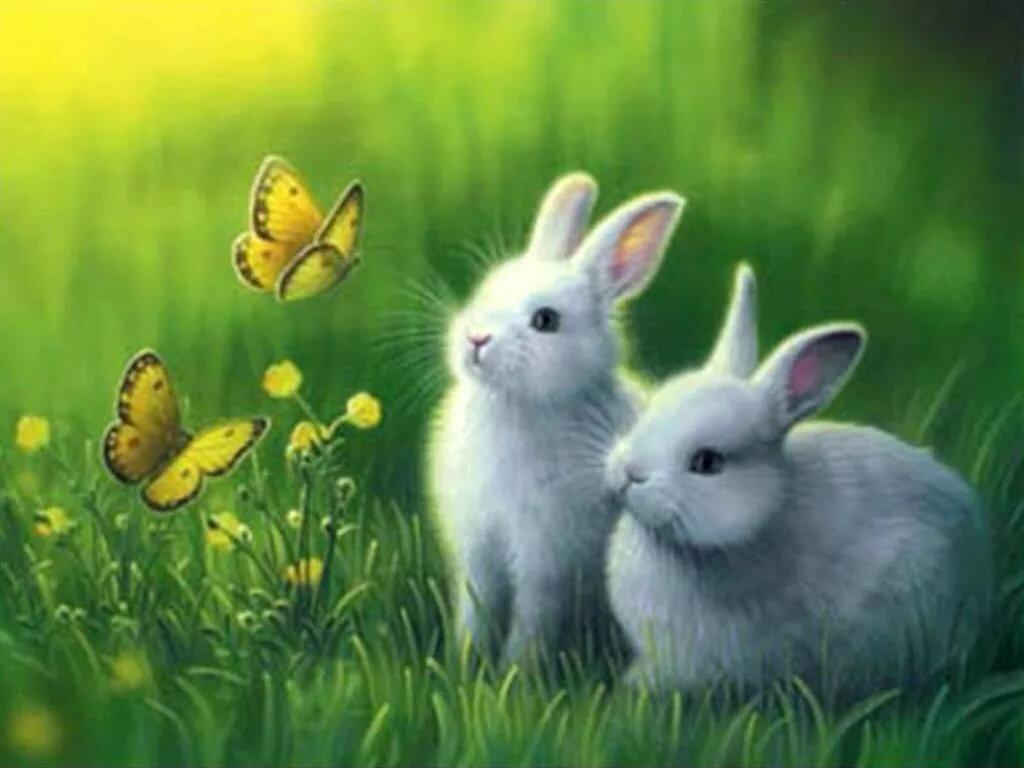 Шутки про, милые анимашки картинки с животными