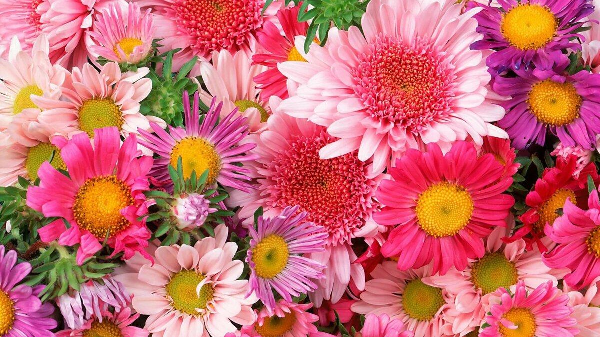 Красивые картинки красивые цветы
