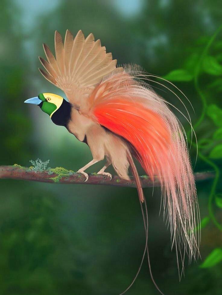 через райские птицы красивые фото органично вписалась коллектив
