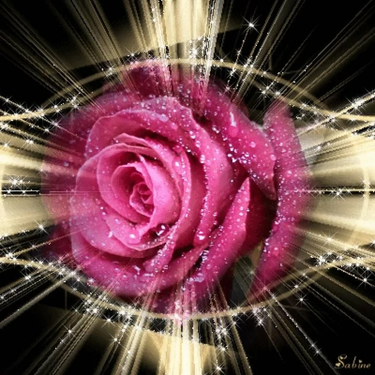 цветы гиф картинка красивая никогда выкладывает семейные