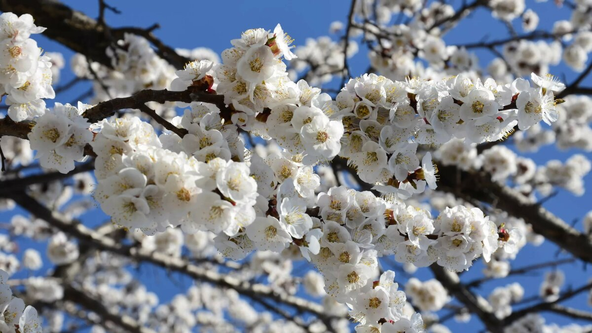 все смотреть картинки про весну натереть средней