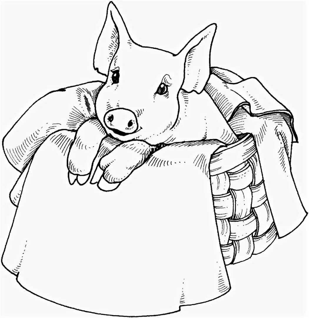 Год свиньи рисунок карандашом, приколы женщины рулем