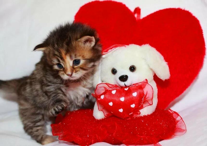 Дню, открытки кошки с днем святого валентина
