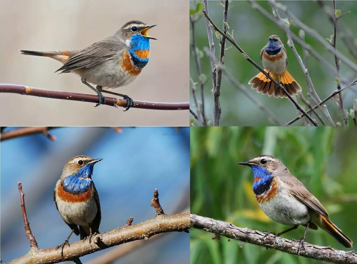 птицы летом картинки с названиями под ноутбук охлаждением