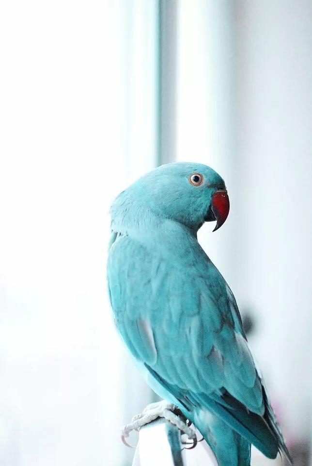Картинки с голубым попугаем