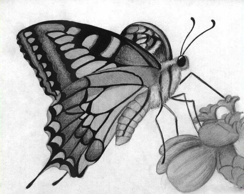 Бабочки рисунки карандашом картинки, днем валентина