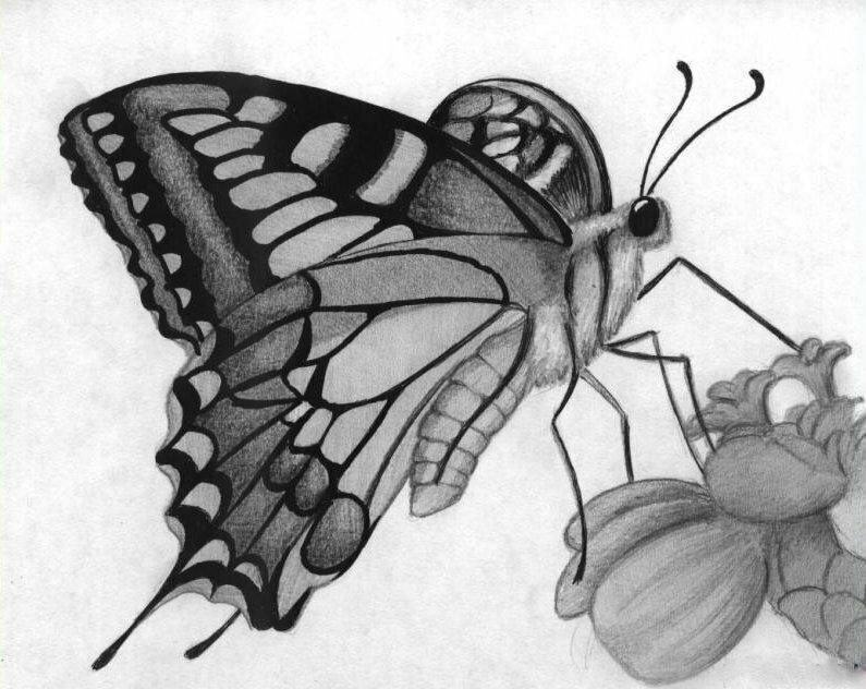 Картинки диван, картинки бабочка на цветке в карандаше