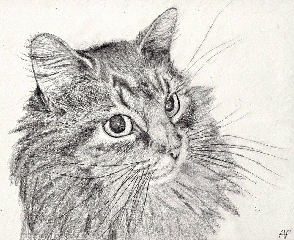 Коты картинки нарисованные карандашом